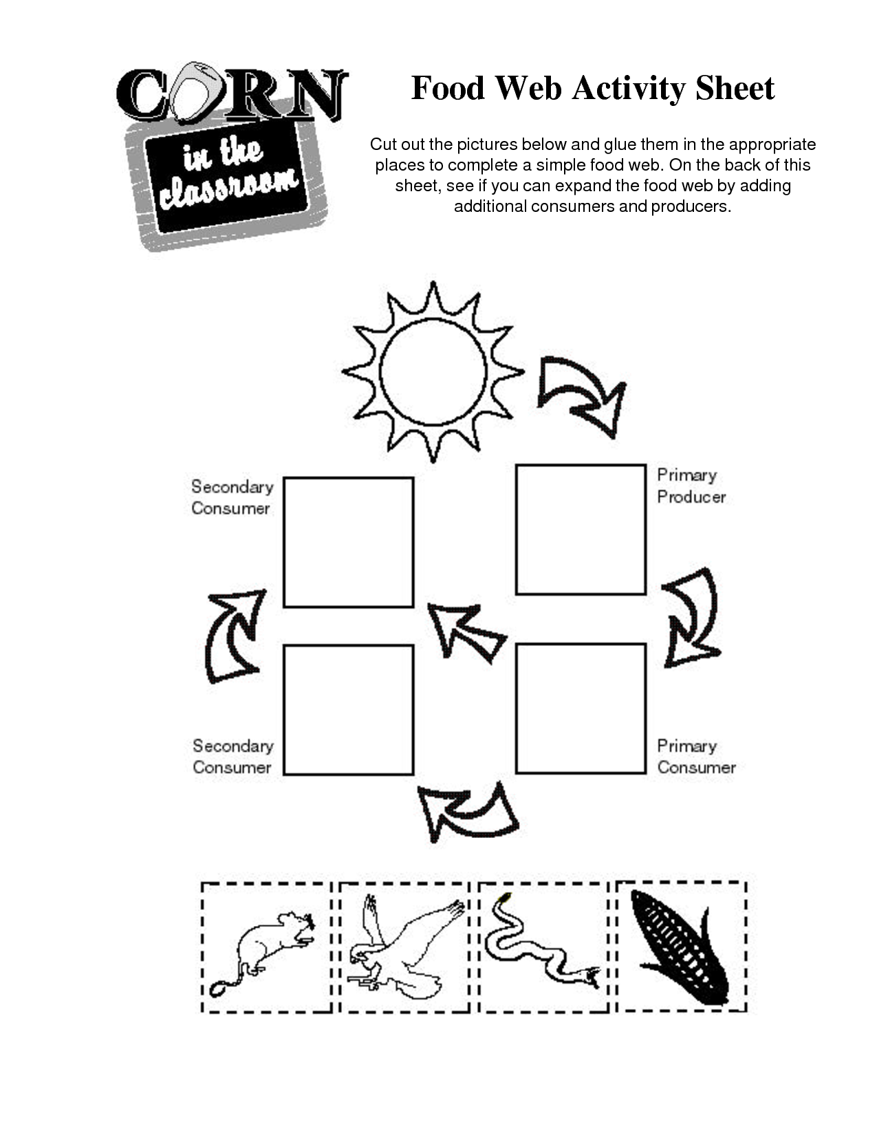 Worksheet Food Webs For Kindergarten Students food web activity sheet chain corn pinterest sheet