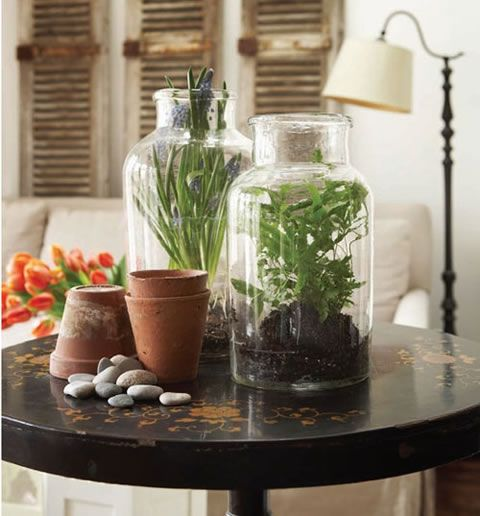 Choosing Terrarium Plants Ideas for Home Decoration