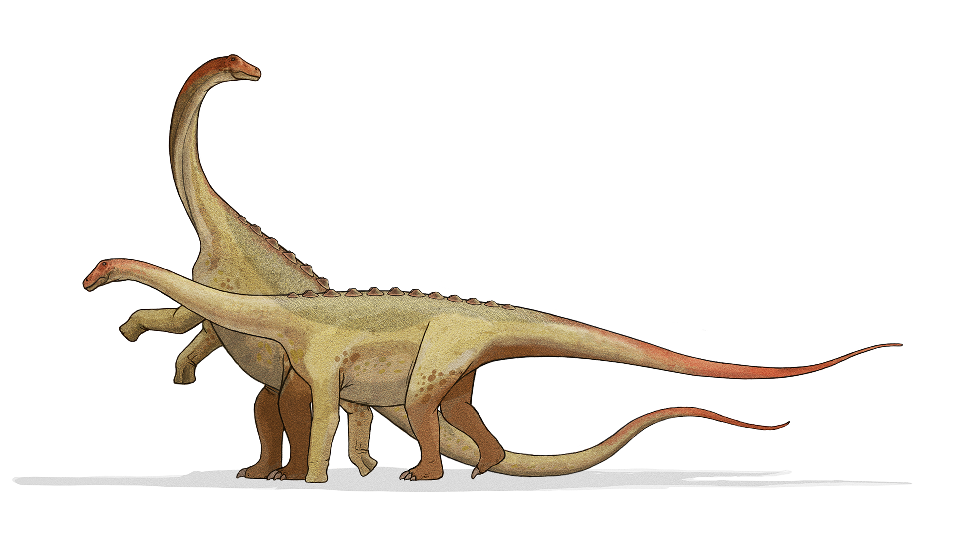 Widescreen Wallpapers: dinosaur image, 1920 x 1080 (925 kB)