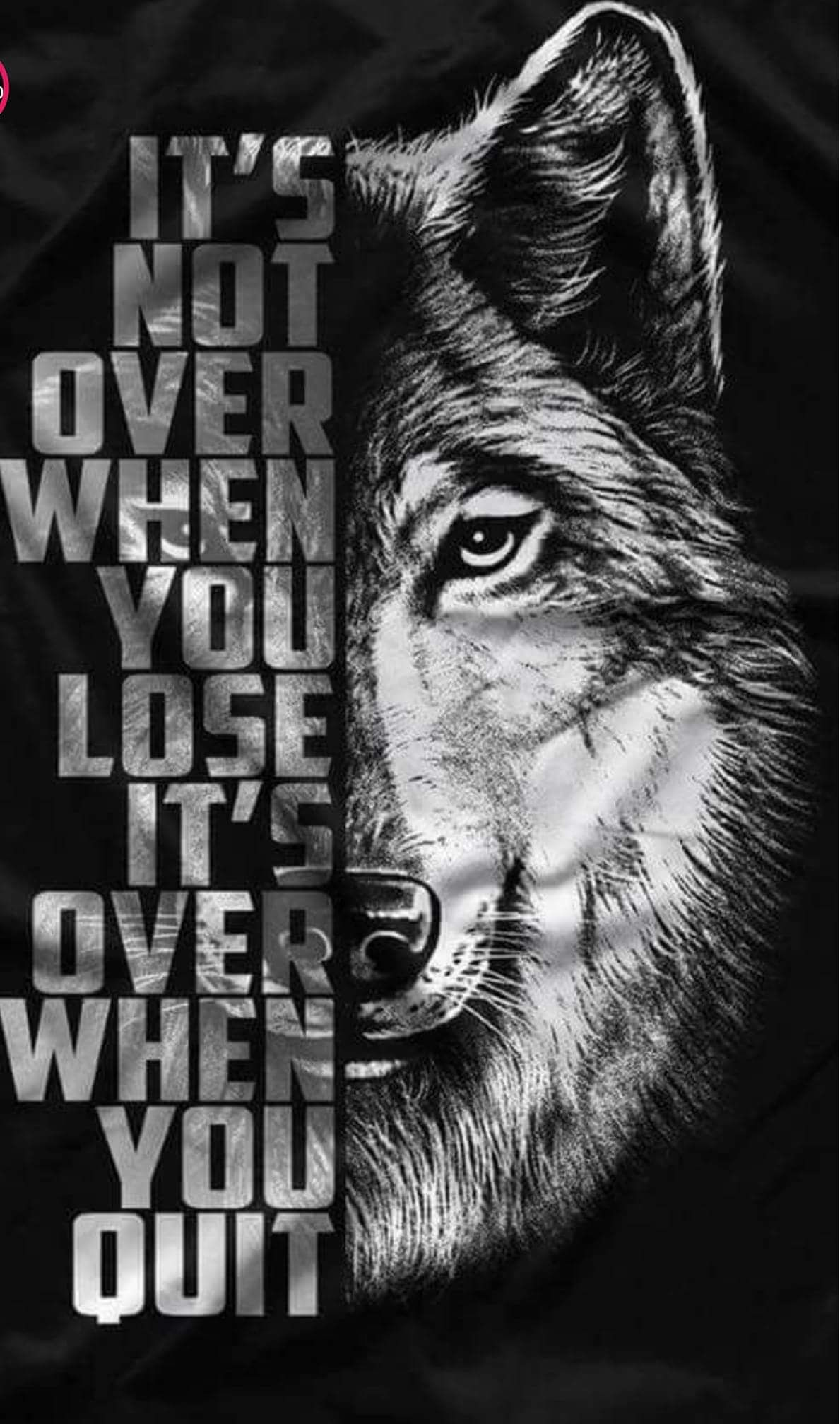 My pack of wolves on wolf twitter and motivation
