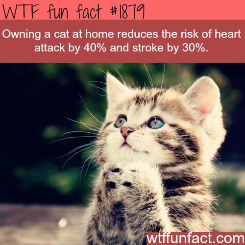 Animals Facts Fun Facts About Cats Cat Facts Animal Facts