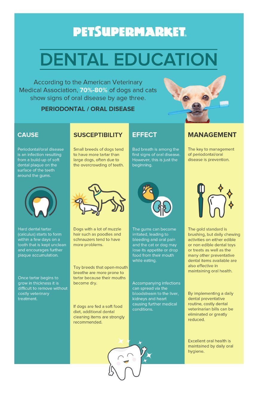 Tips Facts For Pet Dental Health Month Infographic Pet
