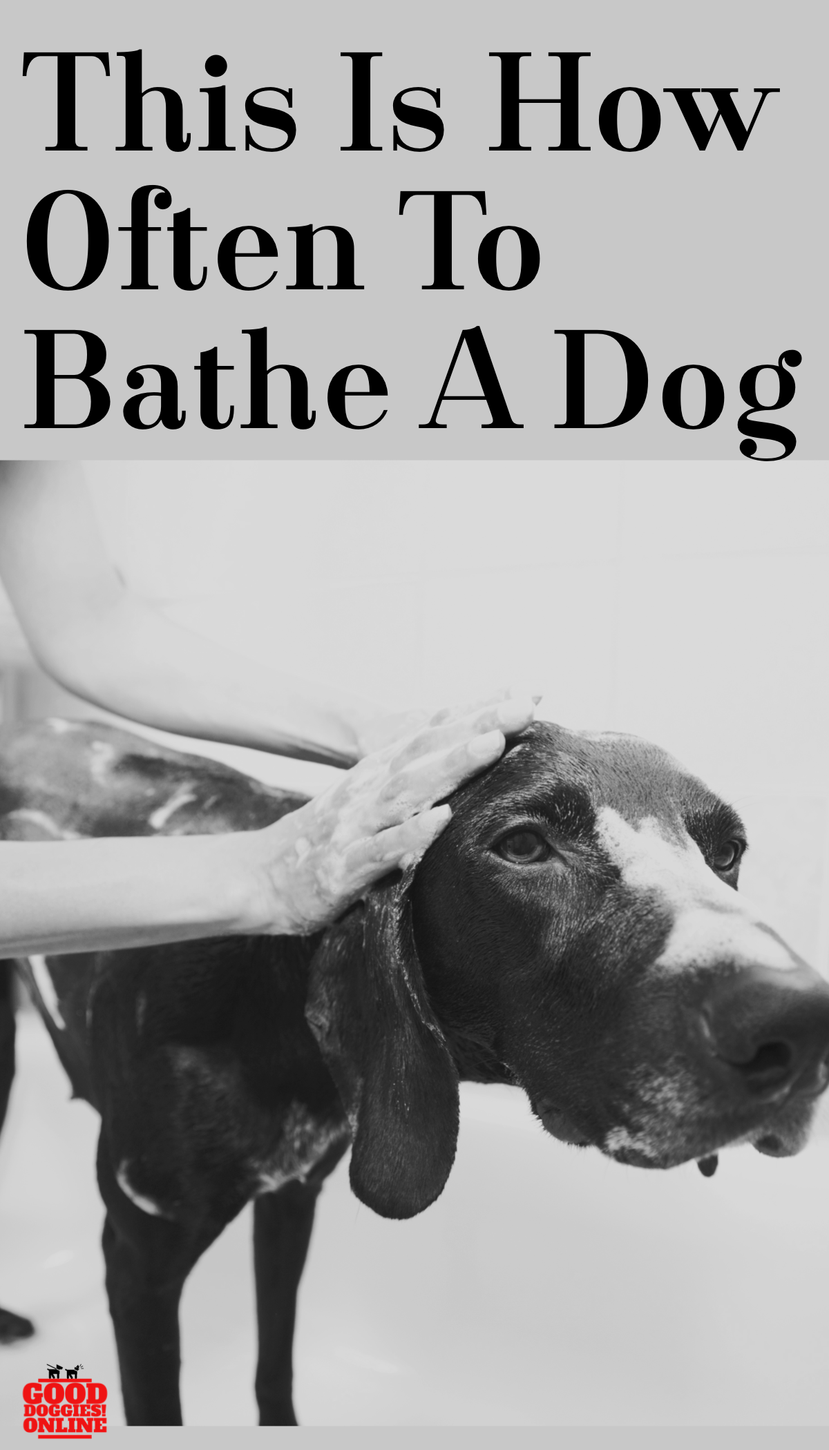 How Often to Bathe a Dog Dogs, Pets, Raining cats, dogs