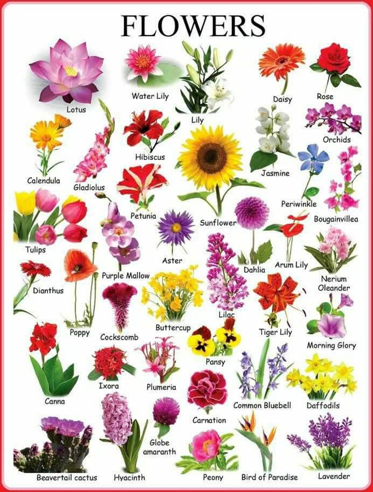 Learn English Vocabulary Through Pictures Flowers And