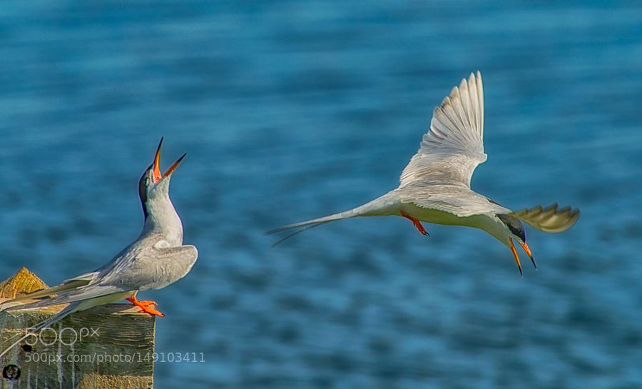 just talk or anger by strock. @go4fotos