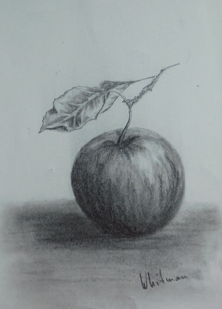Apple Sketch Pencil Painting Pencil Sketch