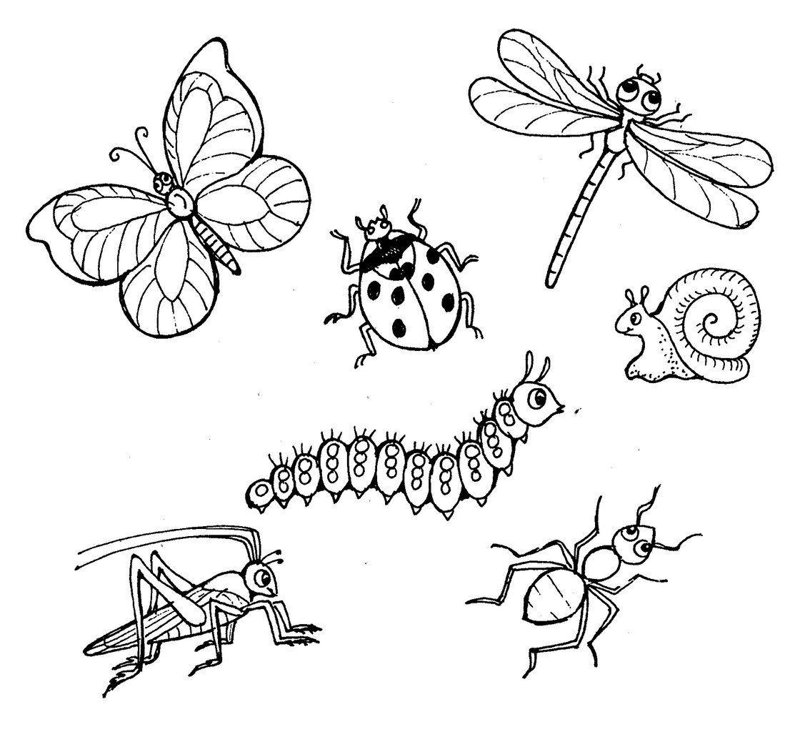 раскраска про насекомых интересные