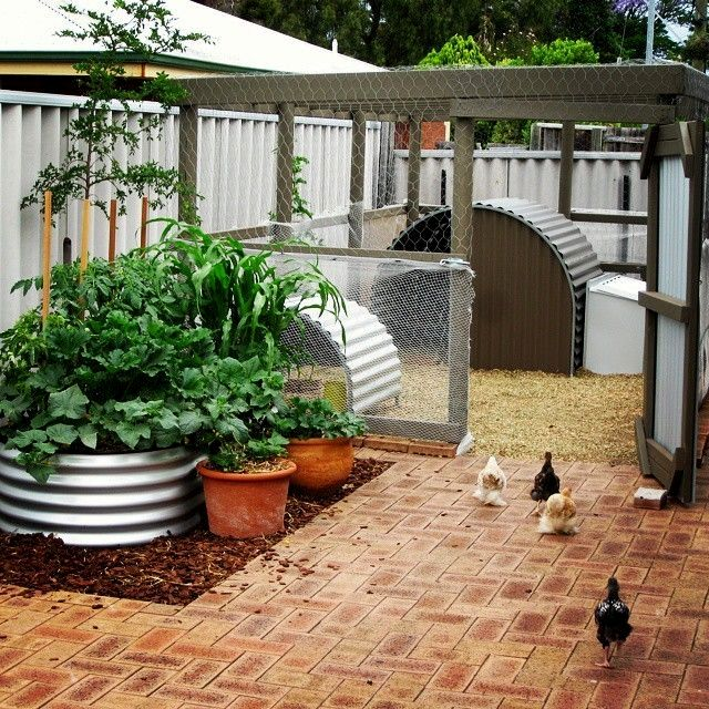 Fun Chicken Coop Designs Guide The Ambient Temperate Of Any Room With Live Plants Is Between 65