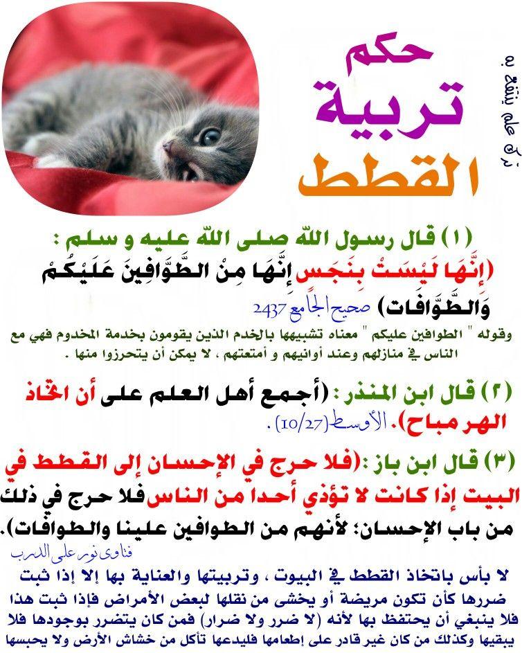حكم تربية القطط Islamic Quotes Islam Salaah