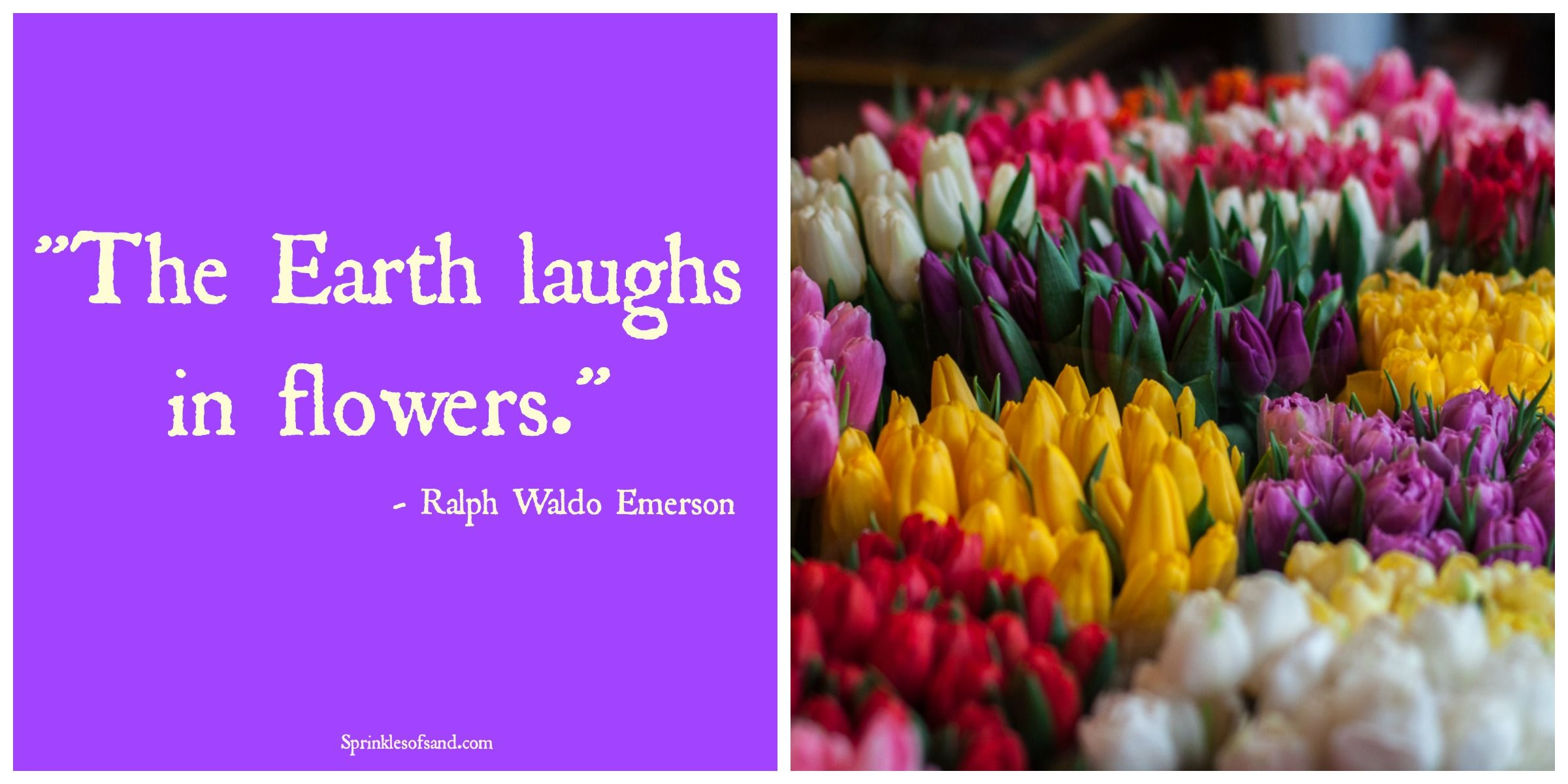 Quote Flowers Flowers Quotes