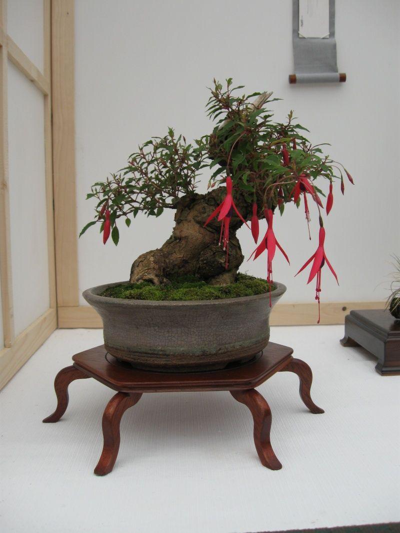 Fuchsia Bonsai : fuchsia, bonsai, Rocio, 雜木, Bonsai, Tree,, Garden