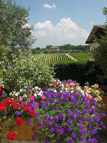 The Casa Emma Vineyard - Chianti, Tuscany