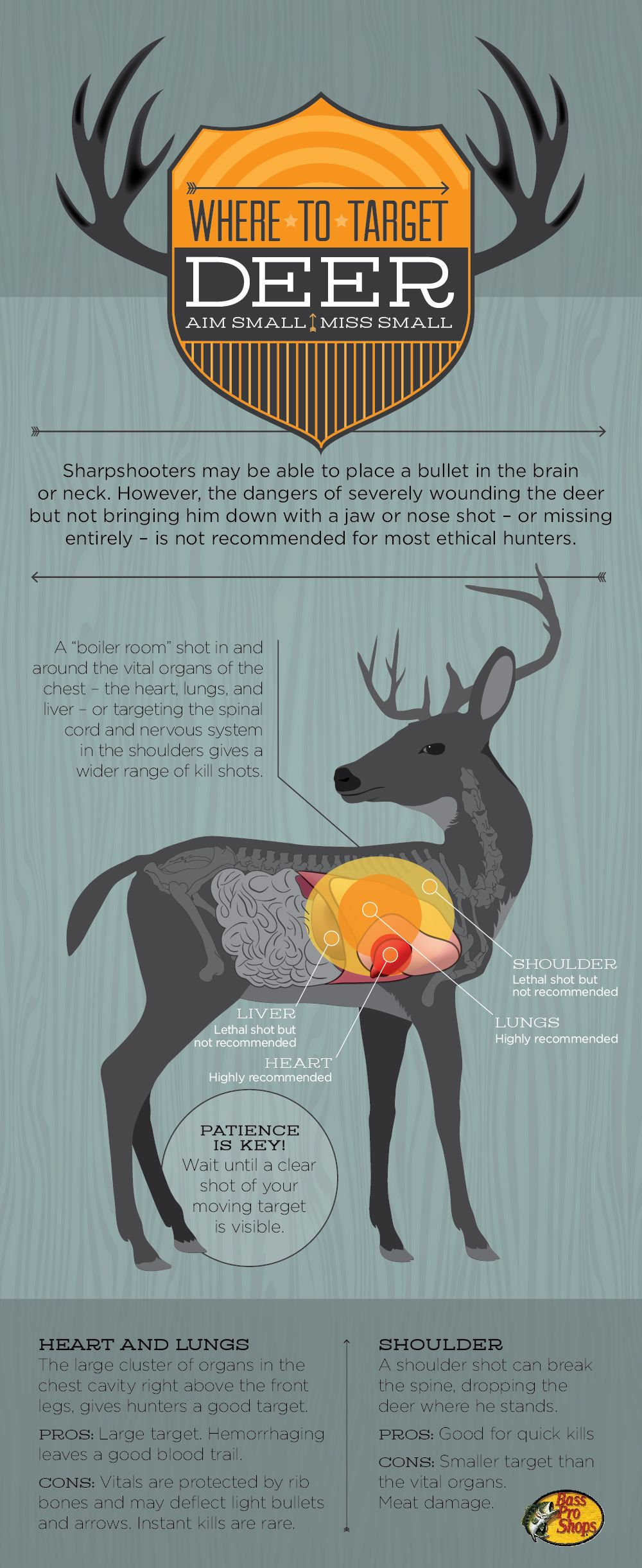Where to target your deer shot kill zone. Whitetail deer