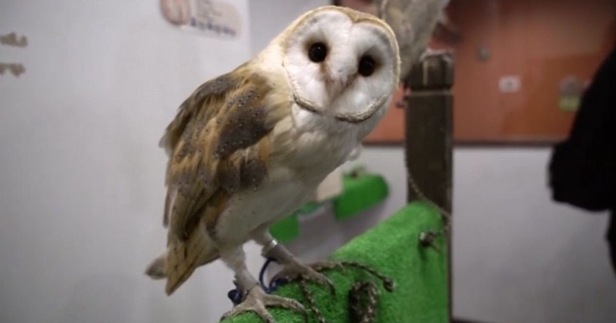 Inside The Bizarre Owl Cafes Where You Can Pet A Bird And Eat