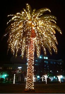 Palm Tree Lights Christmas.I Could Decorate A Christmas Palm Tree And Be Quite Happy