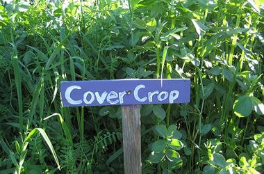 17 Best images about How to pick a cover crop on Pinterest