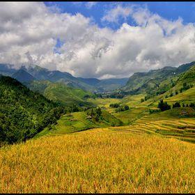 Sapa Rice Terraces by wheretheeyewanders