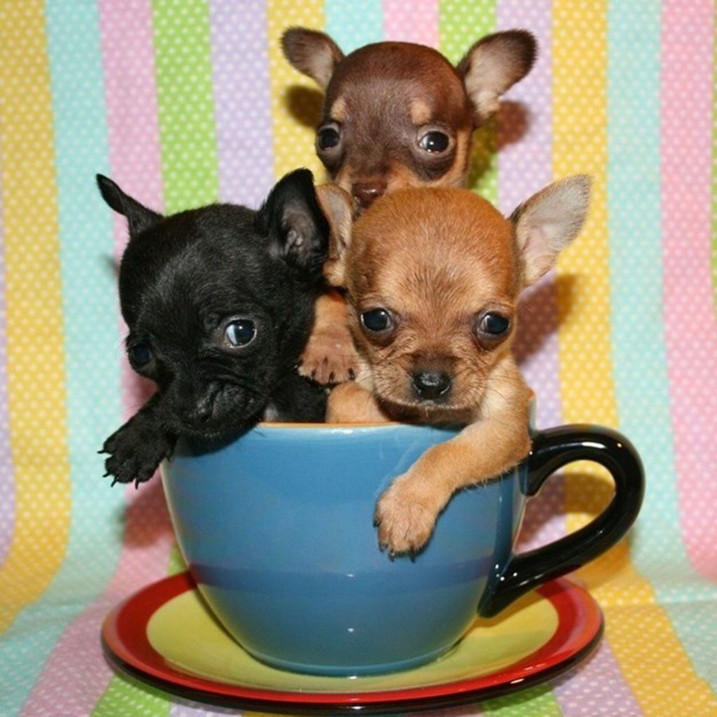 Image result for puppies images