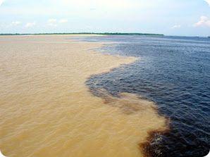 Pororoca - Região Amazônica - Brasil