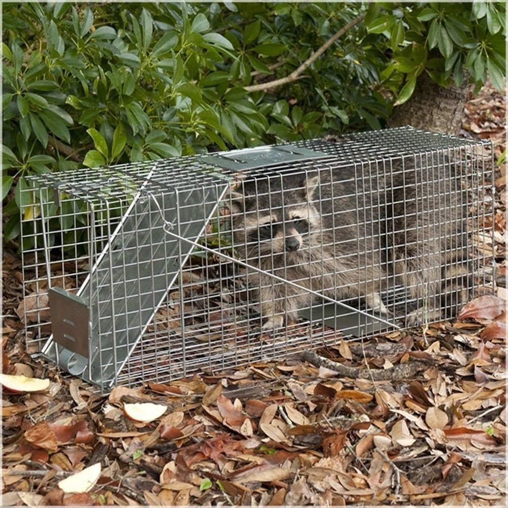 Havahart Live Animal Collapsible Trap for Raccoon