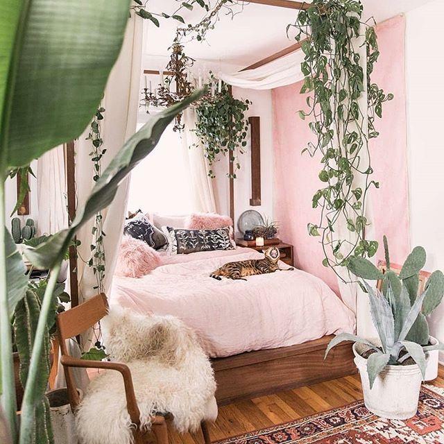le piante in camere da letto sono un'ottima idea non rubano ossigeno