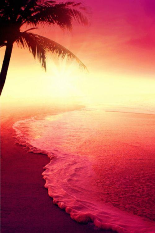 Popular Landscape Nature Wild Photography Beach Sunset Palmtrees Miami Ocean Relax Beautiful Nature Beautiful Sunset Nature
