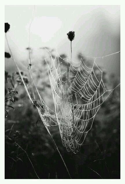 Photography · fog photographydslr photography tipsmonochrome