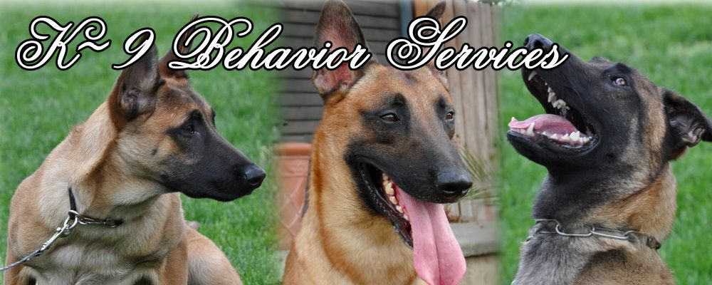 Belgian Malinois Breeder Working Line Belgian Malinois Puppies For Sale Malinois Puppies Belgian Malinois Puppies Malinois Puppies For Sale