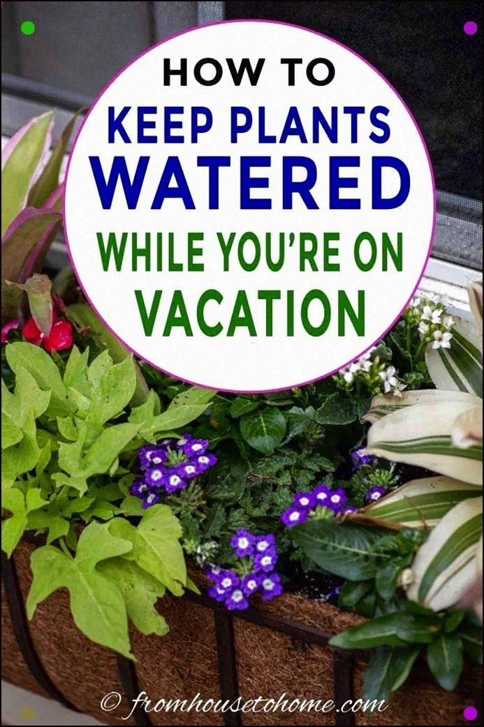 StepByStep Tutorial Will Help You Set Up An Automatic Watering System That Will Keep Outdoor Planters Watered While Youre On VacationThis StepByStep Tutorial Will Help Yo...