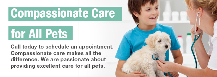 Sunnyside Pet Hospital 5726 E Kings Canyon Rd Fresno Ca 93727 559 251 2463 Pet Clinic Animal Hospital Veterinary Hospital