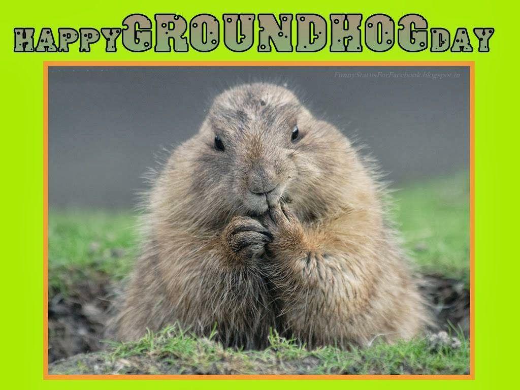 Ground hog day happy groundhog day greetings card ecard free ground hog day happy groundhog day greetings card ecard m4hsunfo Choice Image