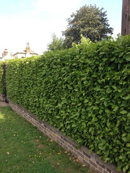 These Hedges Can Add Interest To Your Winter Garden Garden Hedges Front Garden Landscape Hedges Landscaping