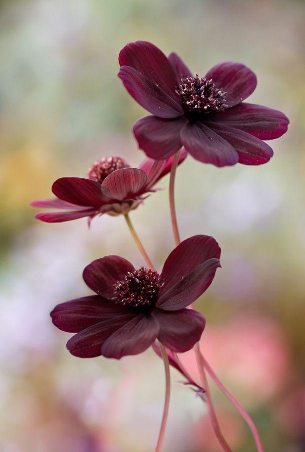 Rubydusted Wonderful Flowers Beautiful Flowers Pretty Flowers