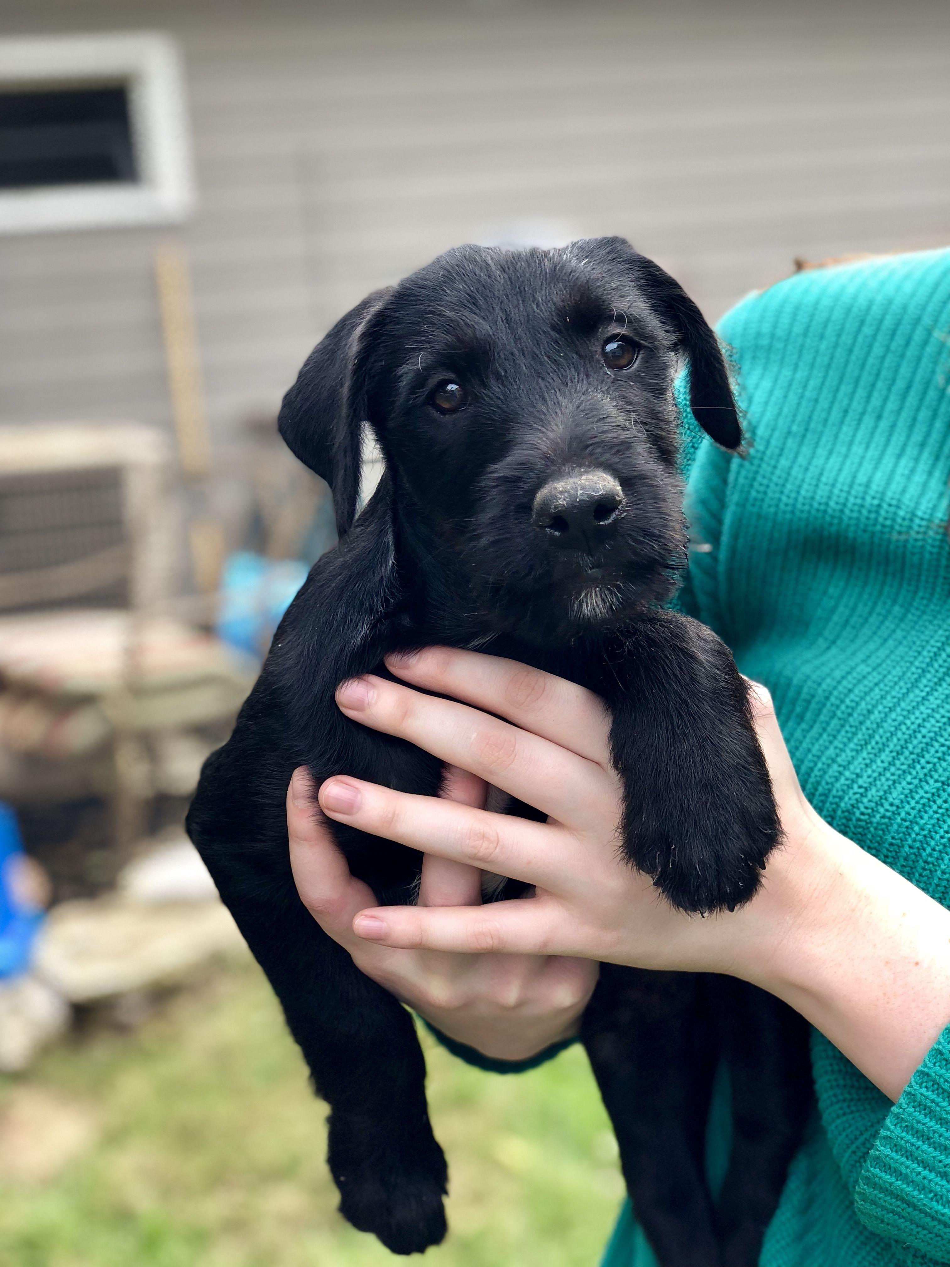 Adopt Sprocket On Autres Labrador Retriever Mix Labrador
