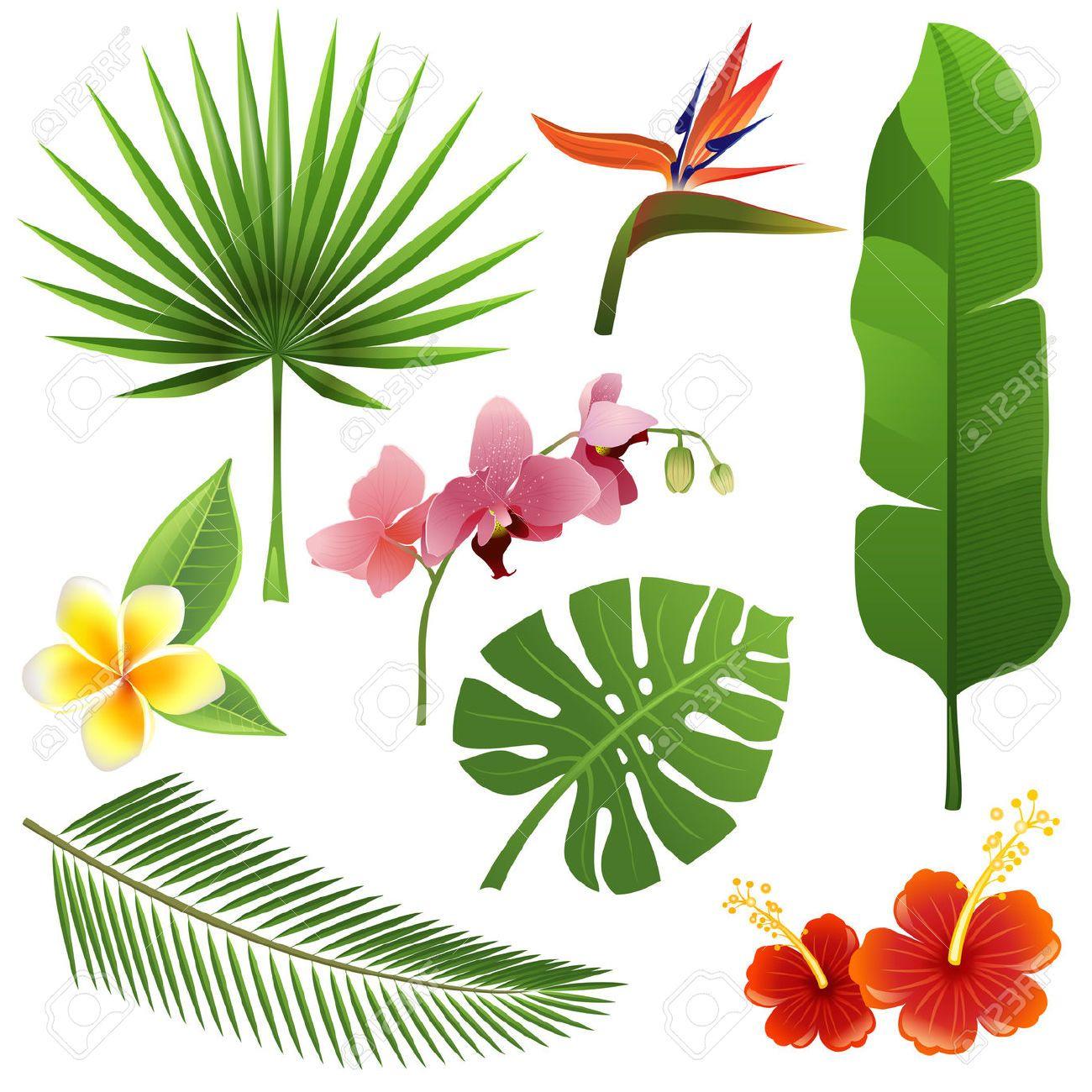 Conjunto de hojas y flores tropicales ilustraciones for Art flowers