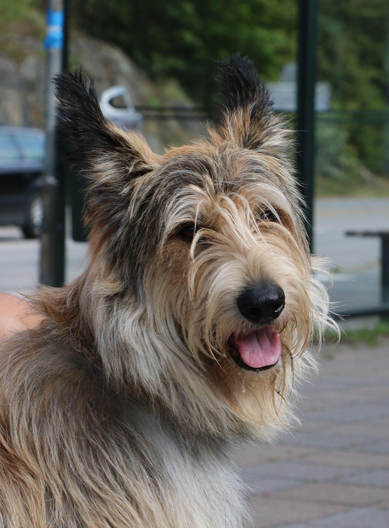 Dennis (Berger Picard) visiting Stockholm Dogs