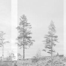 Fotobehang - Panorama - Grey