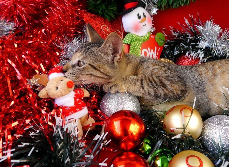 Guten Rutsch Ins Neue Jahr Katze #GutenRutschInsNeueJahrKatze ...