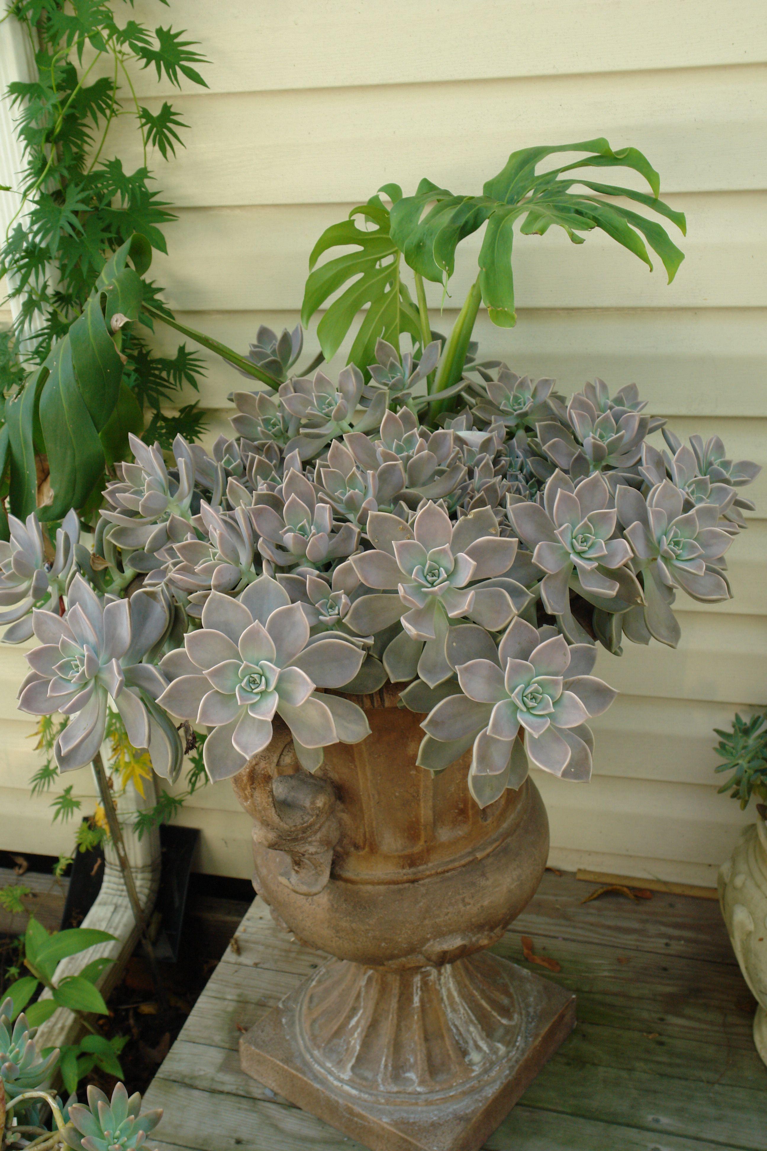 My succulent plants