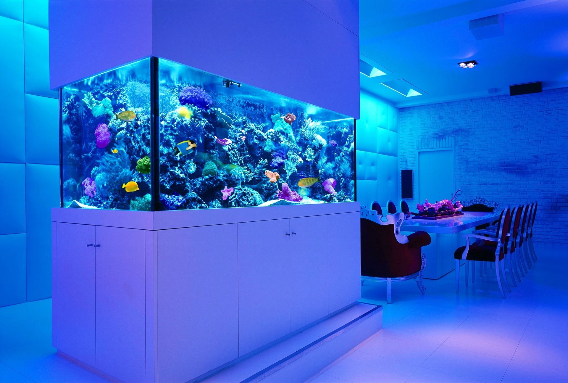 Transform the Way Your Home Looks Using a Fish Tank | Modern fish ...