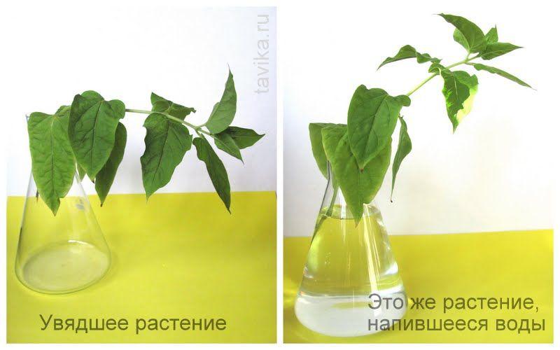 опыт с растениями картинки