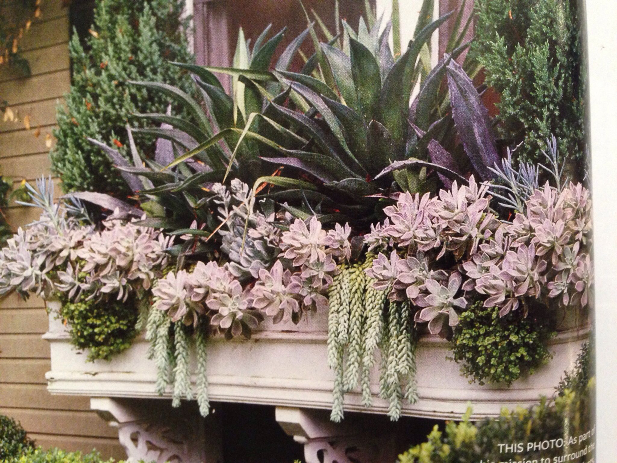 Succulent window box  DYING Outdoor Living Pinterest Window