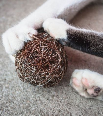 Declawing A Cat Why You Should Never Declaw Your Cat Http Www Catsadvices Com Declawing A Cat Declawing Cats Cat Claws Cat Anatomy