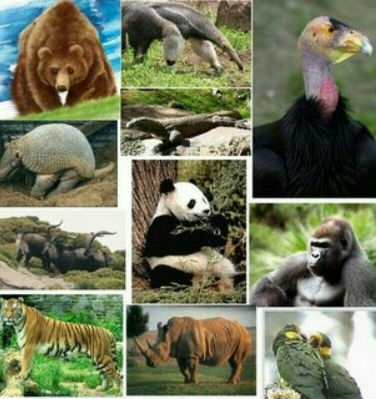 Pin by Roe Forestier on Animal collage   Endangered ...