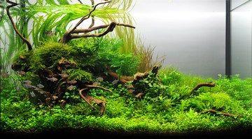 aquascape (With images) | Aquascape, Aquarium, Animals