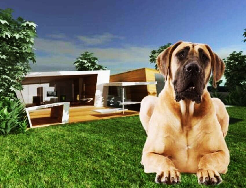 Some Of The World S Most Expensive Pet Accessories Costs More Than Your House Dog Houses Dog Mansion Great Dane