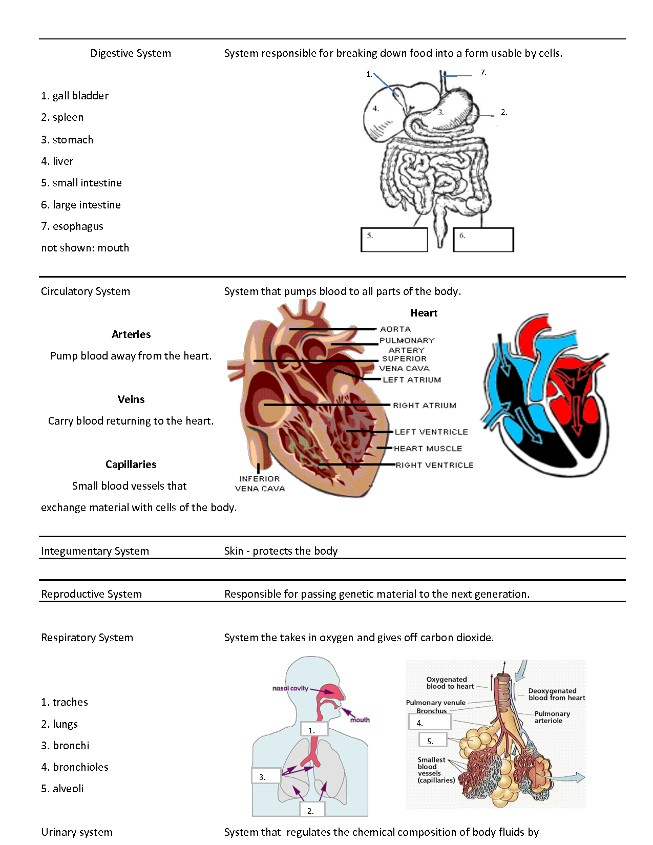 What Are the Organ Systems of the Human Body? - Video ...