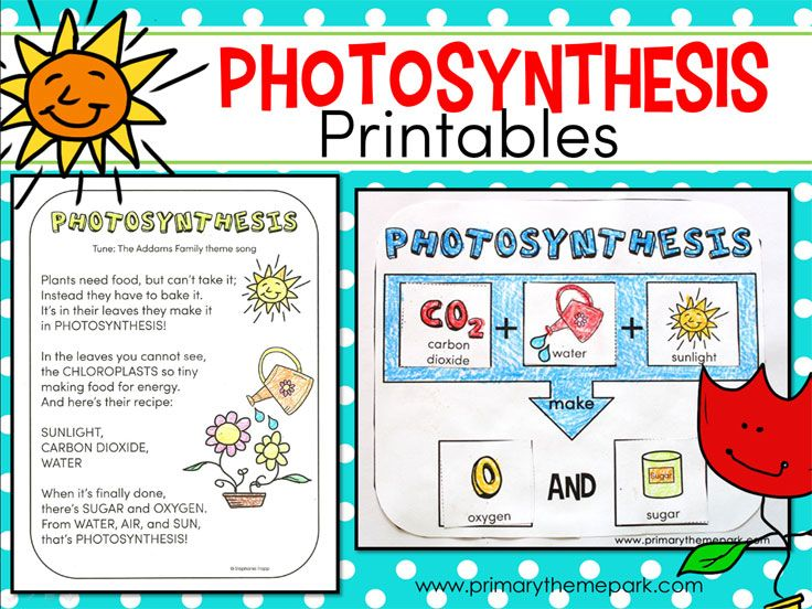 Photosynthesis For Kids Photosynthesis Lessons Photosynthesis