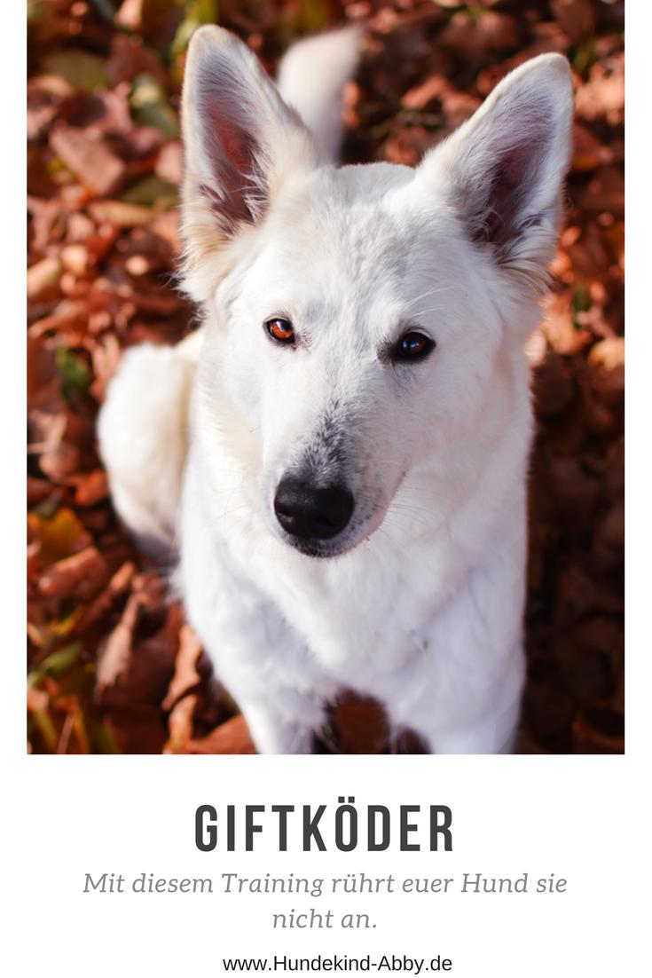 So lässt euer Hund jeden Giftköder liegen Werbung