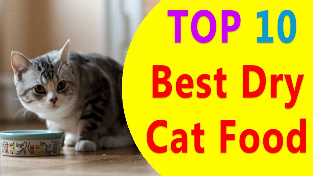 Best Dry Food For Cats Top 10 Best Dry Cat Food 2016